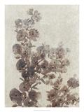 Sepia Flower Study I Premium Giclee Print by Tim OToole