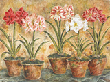 Terrace Companions Prints by Judy Shelby