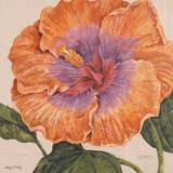 Island Hibiscus II Art by Judy Shelby
