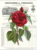 Heirloom Roses A Posters by Sarah E. Chilton
