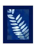 Cyanotype Fern Posters by Dan Zamudio