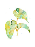 Watercolour Tropical 3 Prints by Mary Escobedo