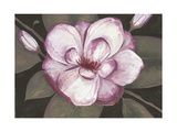 Blushing Magnolia Prints by Filippo Ioco