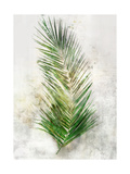 Textured Areca Palm Posters by Ken Roko