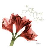 Amaryllis Love Poster by Albert Koetsier
