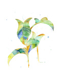 Watercolour Tropical 4 Poster by Mary Escobedo