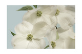 Spring Whites Prints by Julie Greenwood