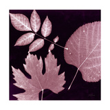 Cabernet Sunprint Leaves Prints by Dan Zamudio