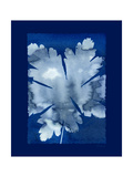Cyanotype Leaf Art by Dan Zamudio