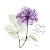 Smile Always Purple Poster by Albert Koetsier