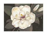 Southern Magnolia Posters by Filippo Ioco