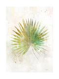 Textured Fan Palm Prints by Ken Roko