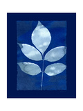 Cyanotype Birch Prints by Dan Zamudio