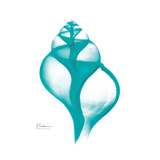 Turquoise Tulip Shell Posters by Albert Koetsier