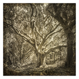Enchanted Forest 1 Prints by Kimberly Allen