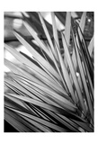 Metal BW Plant 2 Posters by Kimberly Allen