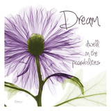 Purple Chrysanthemum Dream Prints by Albert Koetsier