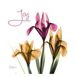 Pink Iris Joy Art by Albert Koetsier