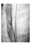 Metal BW Plant 1 Prints by Kimberly Allen
