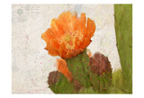 Cacti Flower Prints by Kimberly Allen