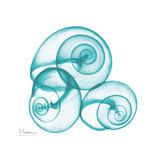 Turquoise Sky Snails Posters by Albert Koetsier