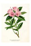 Botanical 1 Posters by Cynthia Alvarez