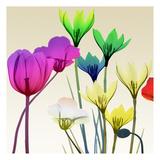 Floral Calm Pop Mate Print by Albert Koetsier