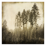 Enchanted Forest 3 Prints by Kimberly Allen