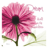 Pink Chrysanthemum Dream Posters by Albert Koetsier