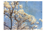 Magnolia Dream Posters by Kimberly Allen