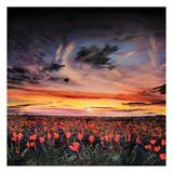 Sunset lit Poppy Field Prints by Michael Romero