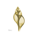 Genie Tulip Shell 2 Prints by Albert Koetsier