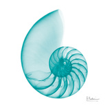 Turquoise Sea Shell Poster by Albert Koetsier