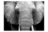 Elephant Lore Print by Cynthia Alvarez