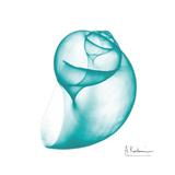 Viridian Water Snail 2 Posters by Albert Koetsier