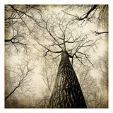 Enchanted Forest 2 Posters by Kimberly Allen