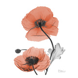 Soft Poppy B16 Prints by Albert Koetsier