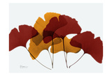 Gingko Fall Prints by Albert Koetsier