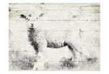 Vintage Lamb Posters by Jace Grey