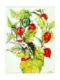 Chinese Lantern Spray, 2005 Giclee Print by Joan Thewsey