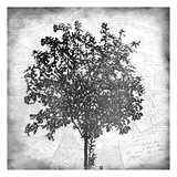 Tree Silhouette Black and White 2 Print by Kimberly Allen