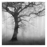 In the Mist Poster von Kimberly Allen