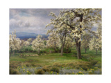 The Pear Orchard, C.1903 Giclee Print by Alfred Parsons