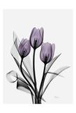 Three Purple Tulips H14 Art by Albert Koetsier