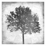 Tree Silhouette Black and White 1 Poster by Kimberly Allen