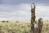 Painted Faces on Trees. Navajo Reservation, Arizona Photographic Print by John Burcham