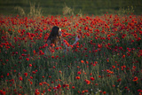 A Woman Relaxes in a Field of Poppies in Tuscany, Italy Photographic Print by Matt Propert