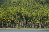 Coconut Plantation Along Coast Near Labilabi Village on Halmahera, Indonesia Photographic Print by Timothy Laman