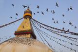 Pigeons on Boudhanath Stupa in Kathmandu, Nepal Photographic Print by John Burcham