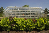 A Lush Vegetable Garden with Large Lettuces Growing in Front of a Greenhouse Photographic Print by Beverly Joubert
